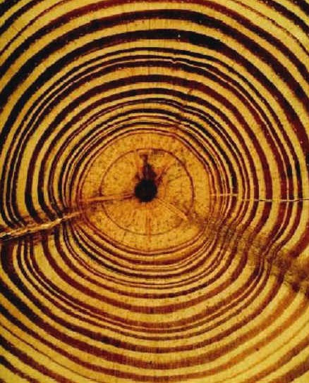 tree ring dating examples Dendrochronology or tree-ring dating is the scientific method of dating based on the analysis of patterns of tree rings, also known as growth rings dendrochronology can date the time at which tree rings were formed, in many types of wood, to the exact calendar year.