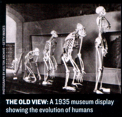 the evolution of early man, Skeleton