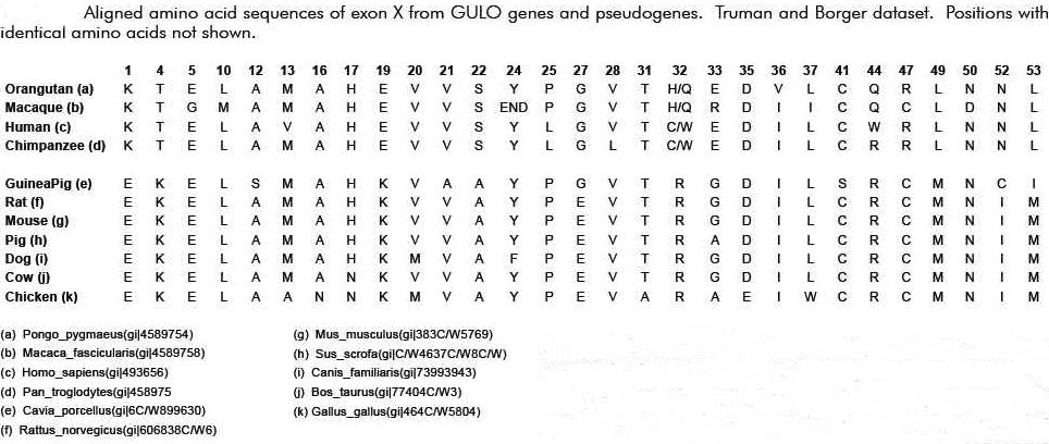 挜=;h_Human Dna Sequence Yah Genetic sequence.